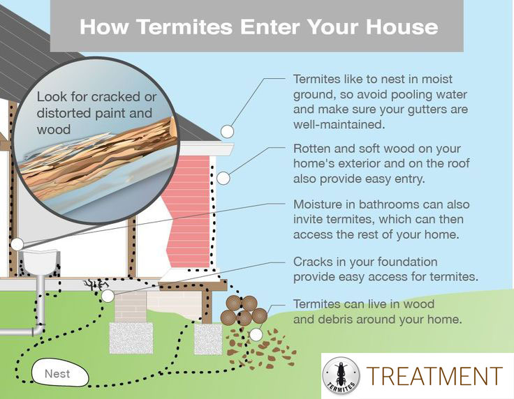 how Subterranean Termites enter your home