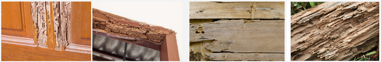 termite structural damage