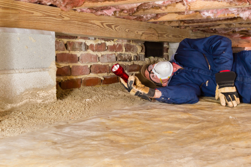 How Much Termite Treatment And Inspections Will Cost